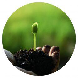 Nachhaltigkeit, Finanzen, Grünes Geld